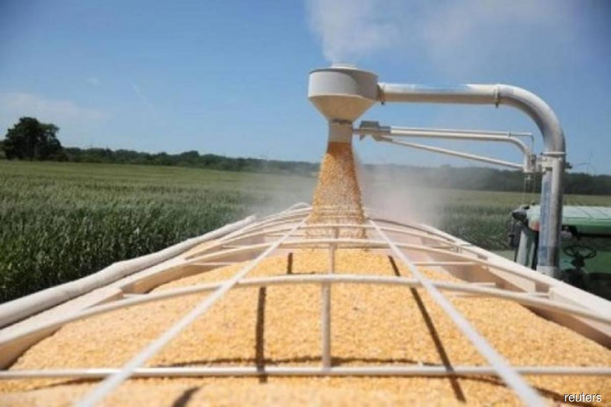 Grains: Weather risk adds premium to US corn, soy, wheat markets
