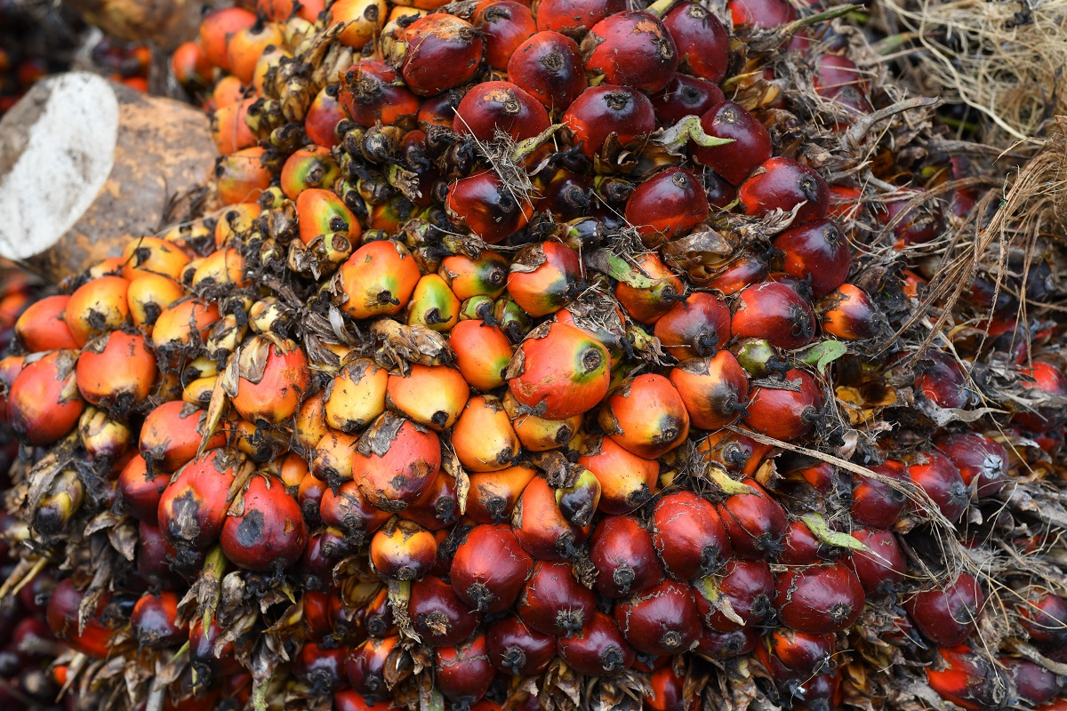 Palm falls to over one-week low on higher Indonesia, Malaysia supply