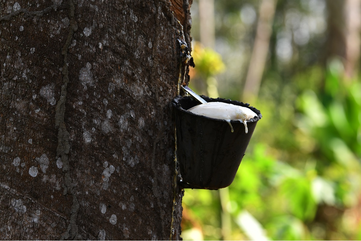 MPIC, MRB plan various programmes to continue empowering rubber industry