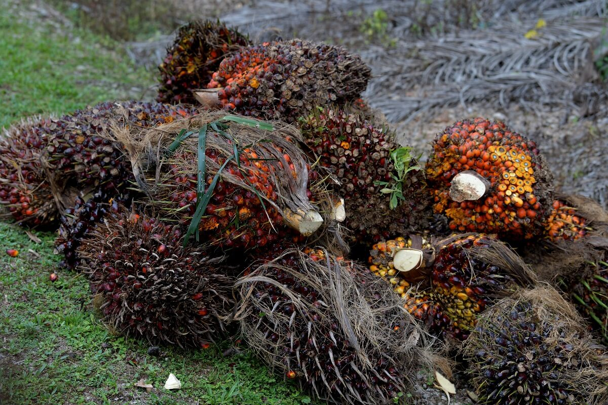 According to CGS-CIMB, Malaysian palm oil stocks likely fell 2.5% month-on-month in September 2021amid higher export volume. (Photo by Mohd Suhaimi Mohamed Yusuf/The Edge)
