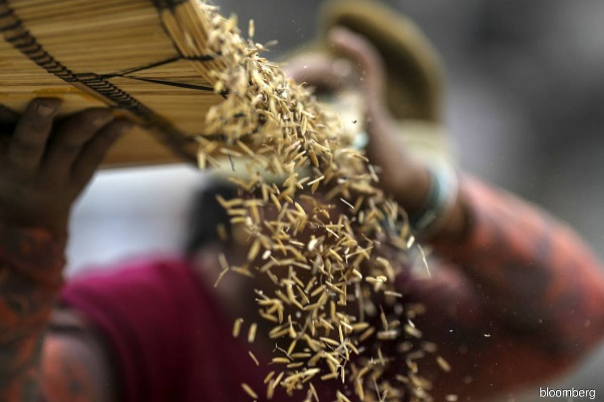 India's summer grains output seen at record 150.50 mil tonnes in 2021/22