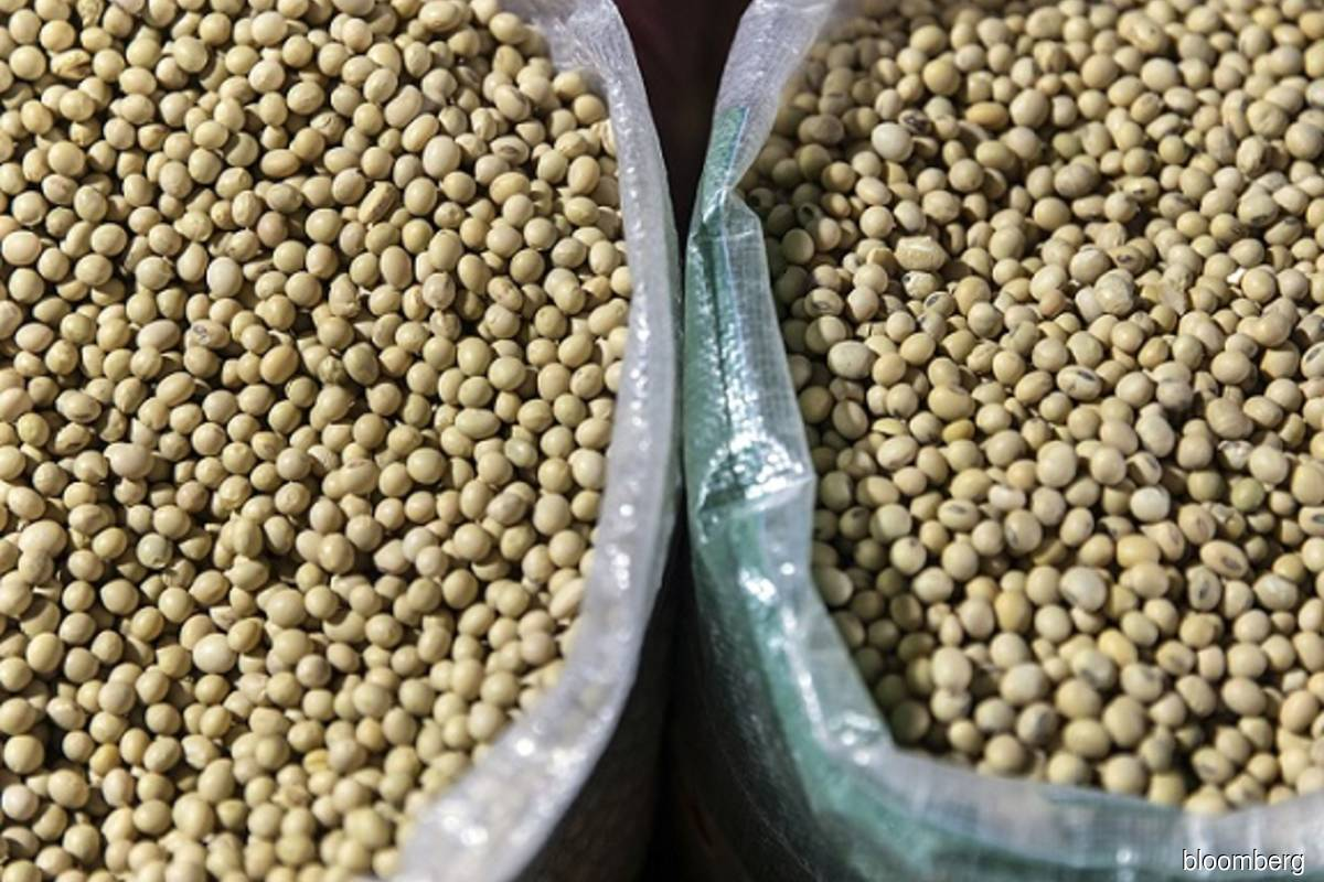 US corn, soy, wheat futures fall sharply on profit taking