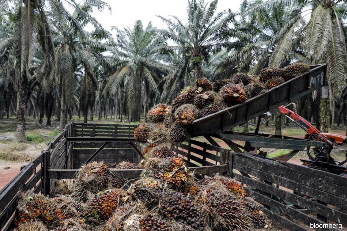 Indonesia's halt to palm oil expansion is set to expire soon
