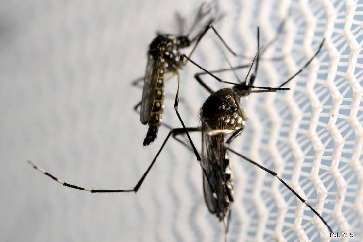 Health DG: Just because of Covid-19, don't forget about dengue
