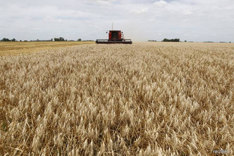 Asia sticks with Argentina for Q1 wheat supply as Australian output shrinks