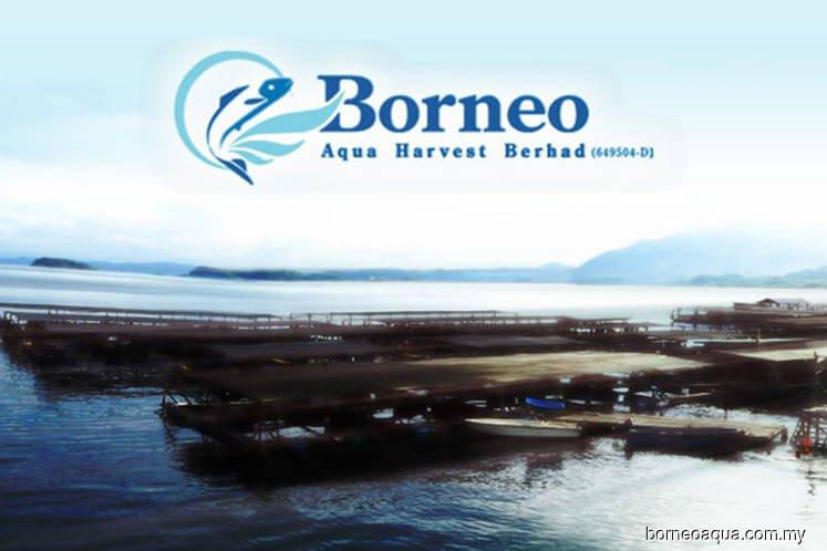 婆罗洲海产养殖接UMA质询