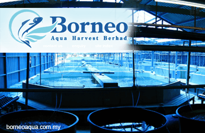 Borneo Aqua unaware of reasons for 40% jump in share price over past week