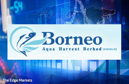 Stock With Momentum: Borneo Aqua Harvest