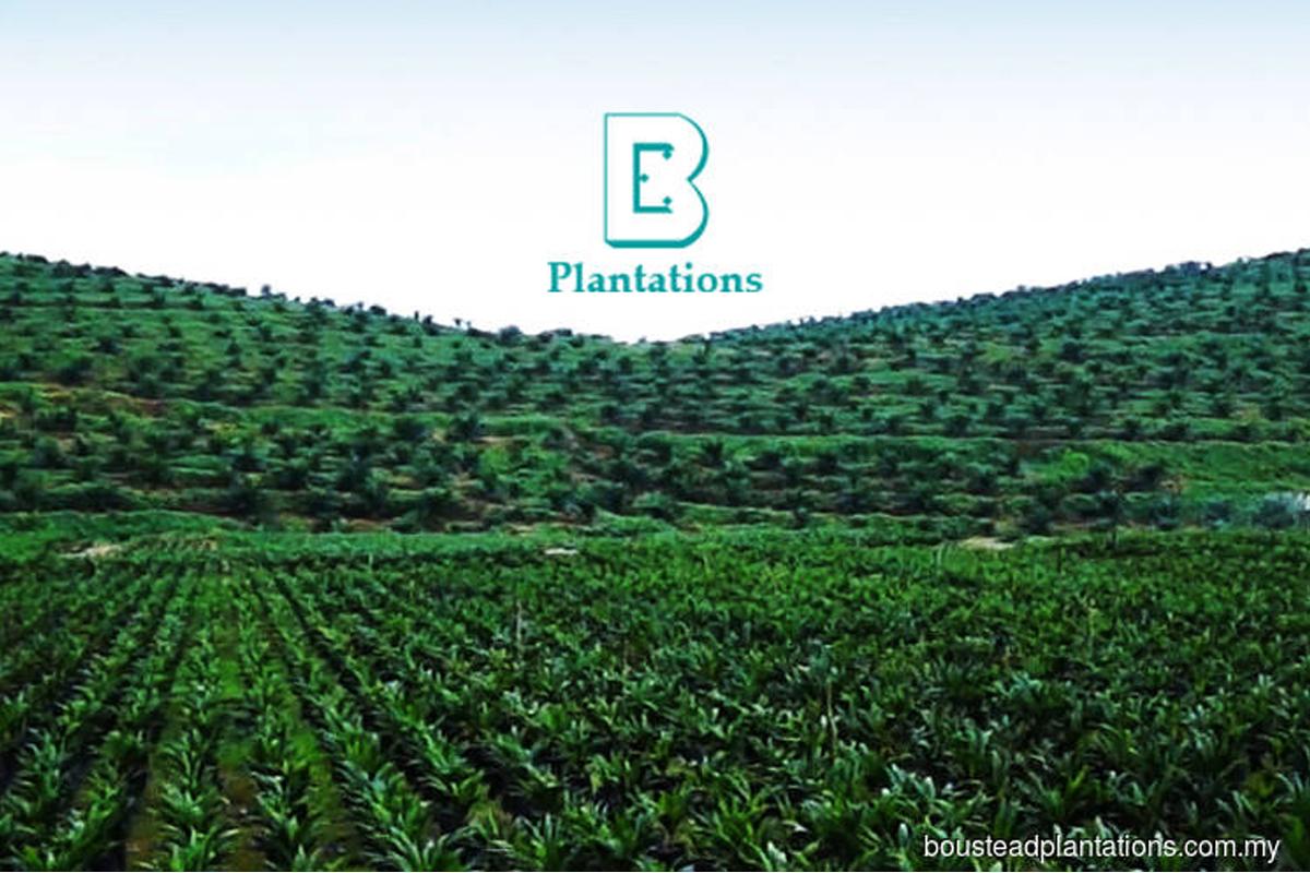 Boustead Plantations to sell Sarawak estates