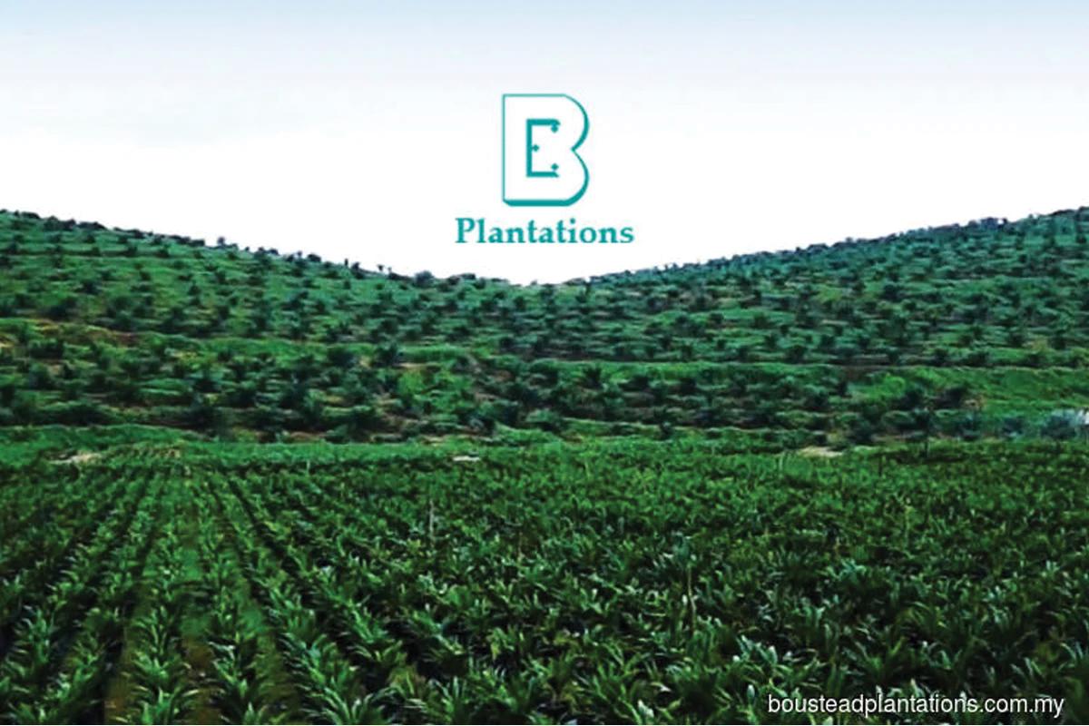 Boustead Plantations rebalances its plantation assets
