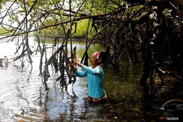 Five trees or a latte? Coastal communities seek crowdfunding for mangroves