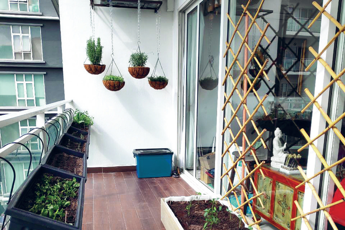 High-rise gardening is gaining popularity in Malaysia (Photo by ESR)