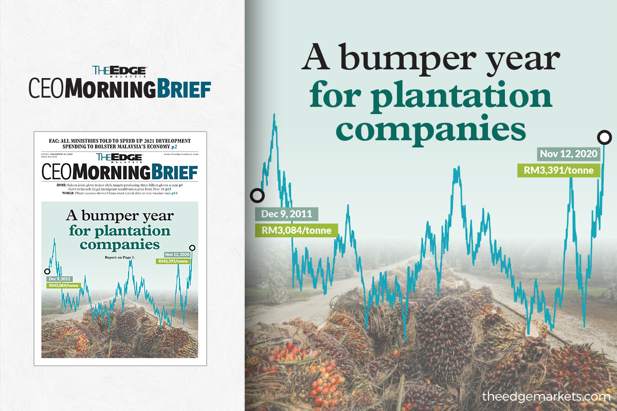 A bumper year for plantation companies