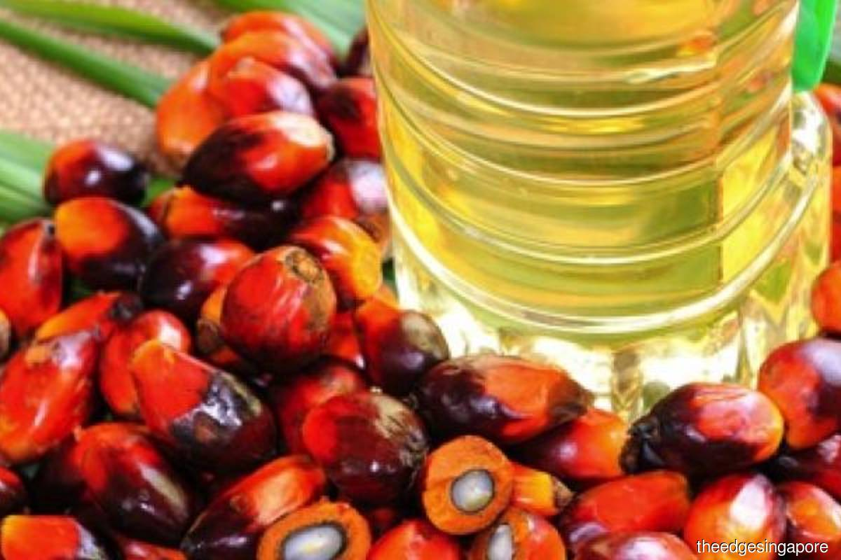 Covid-19 unlikely to yield further severe impact on palm oil demand