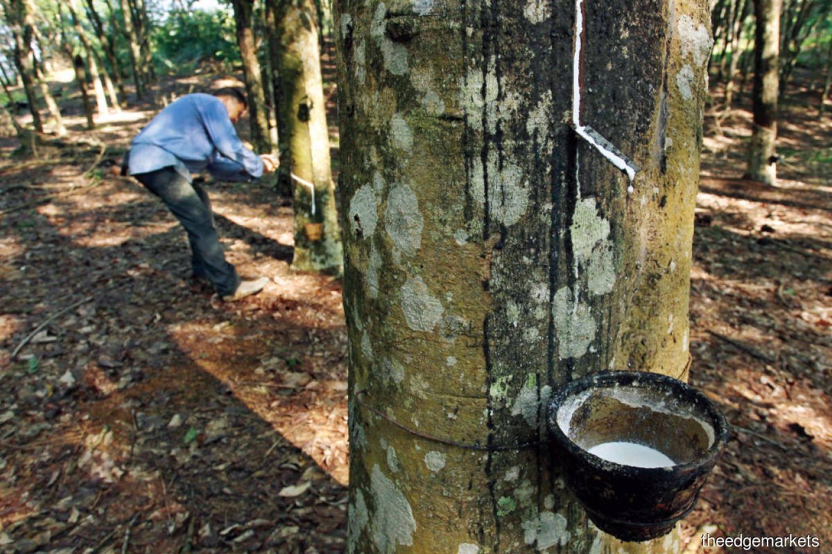 Cover Story: The plight of Malaysia's rubber smallholders