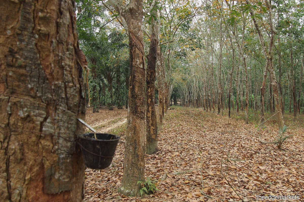 Cover Story: Diverging paths in Malaysia's rubber industry