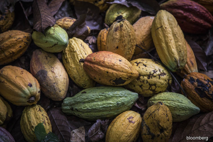 Top cocoa grower poised for record crop as desert winds descend