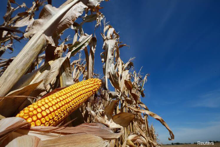 Corn futures jump to 3-yr high as U.S. farmers struggle to plant