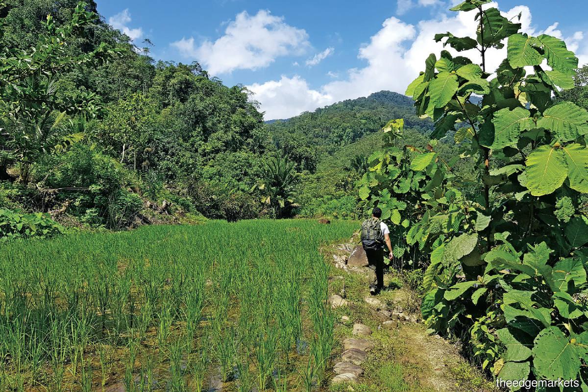 The legendary Salt Trail passes through many rural villages in Sabah
