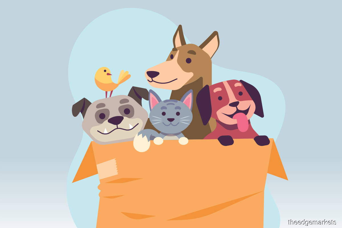 Listicle: Tech gadgets for pet care
