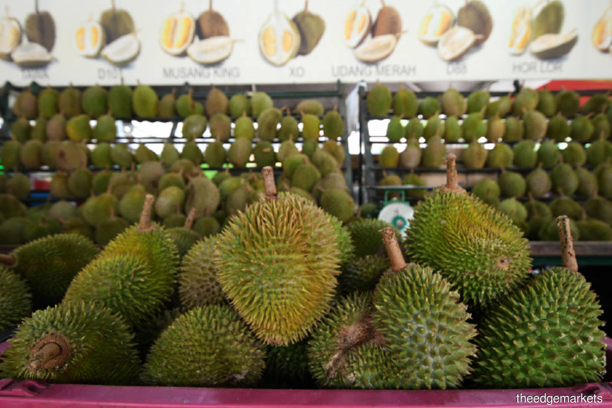 Scheme to legitimise illegal durian farms in Raub can spur exports to China