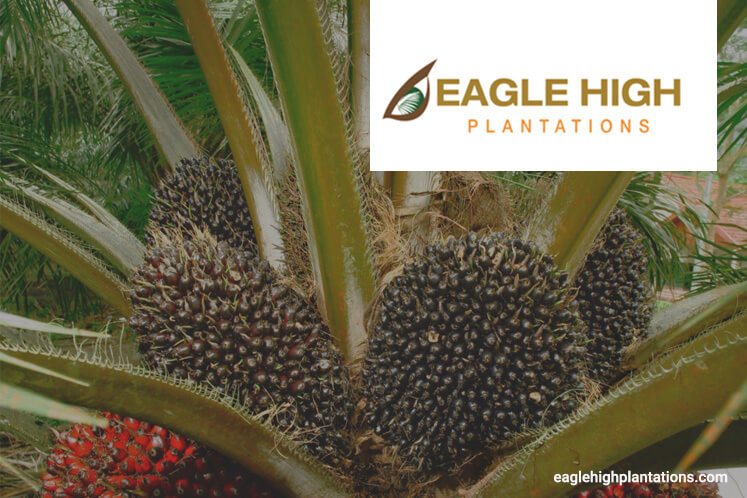 Eagle High in breach of Indonesia's sustainable palm oil standards, says IPOM