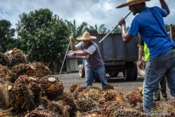 Golden Agri reverses into the red in 3Q and 9M on weaker palm oil prices