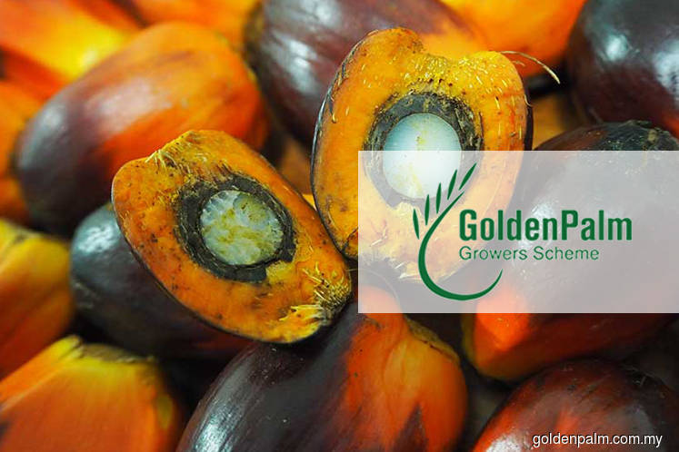 Court orders Golden Palm Growers Scheme to be wound up