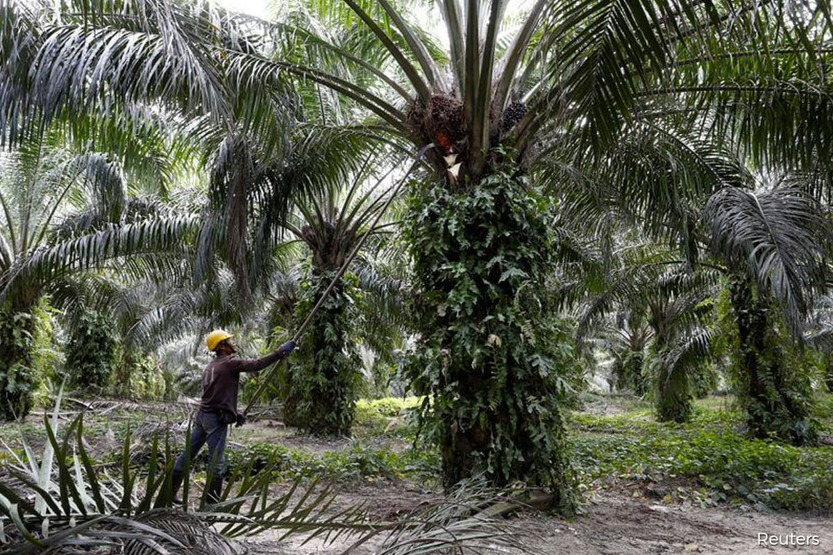 Govt taking measures to deal with oil palm industry labour issues, says Khairuddin
