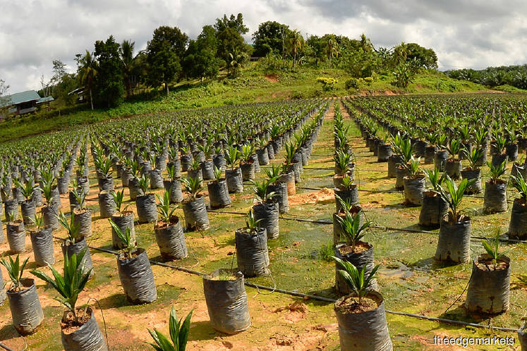 Is it timely for IJM Plantations to be 'married off'?