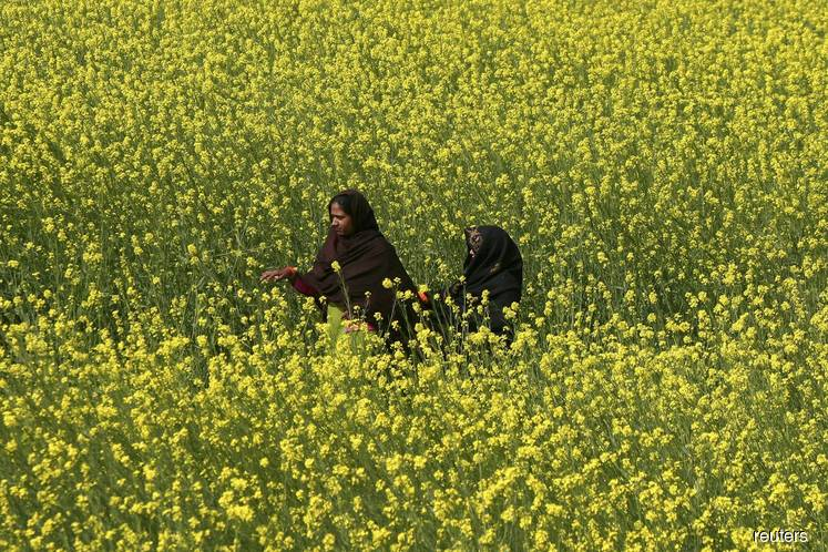 Indian rapeseed refiners call for halt to palmolein imports