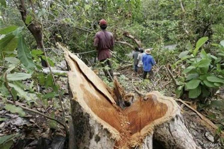 Indonesia plans permanent moratorium on new forest clearance — minister