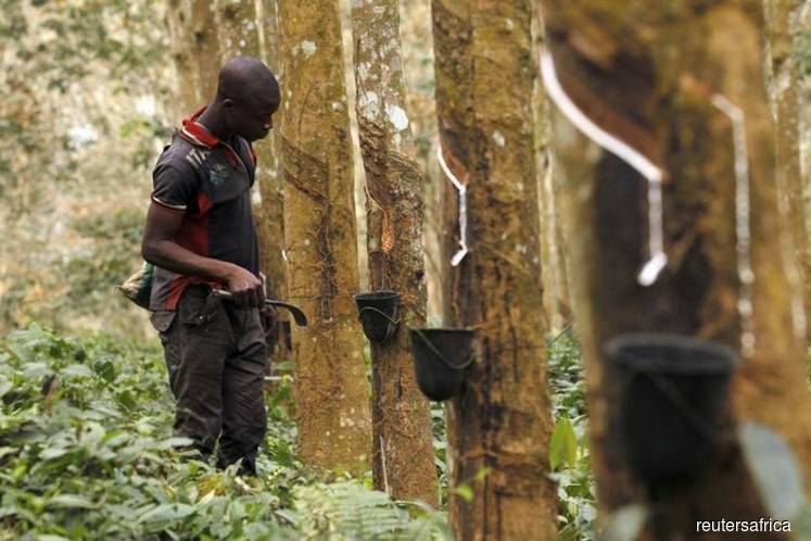Ivory Coast's rubber output jumps 25% in 2019
