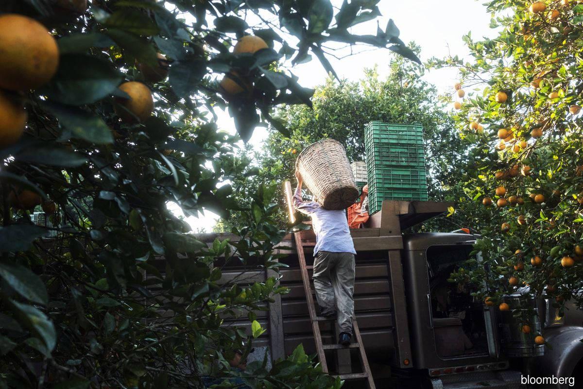 La Nina may disrupt global food supply, send prices higher