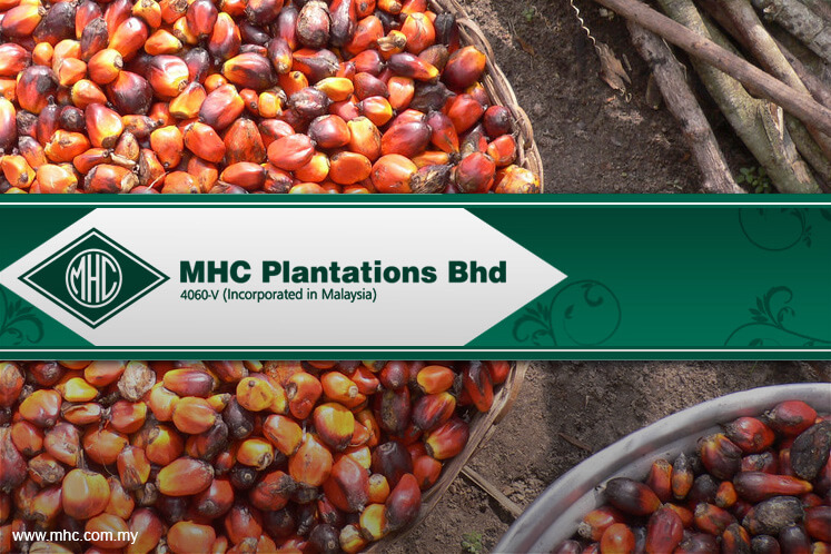MHC Plantations back in the black in 1Q on recovery in palm oil prices