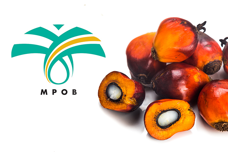 PALM OIL: 96.04 per cent of oil palm estates have achieved MSPO certification - MPOB