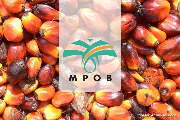 Malaysia's July palm oil stockpile rises with output