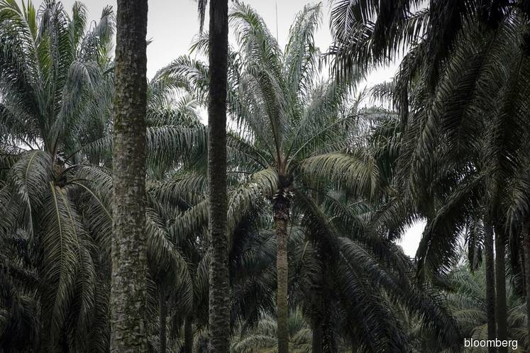 Nigeria plans to invest RM$500 mil to boost palm oil production