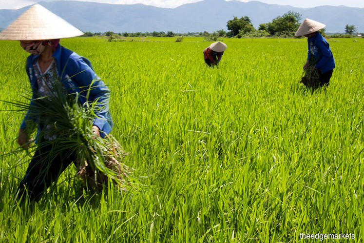 New framework needed for paddy, rice industry