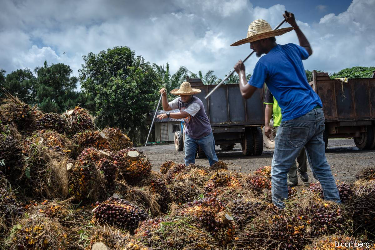 US ban to hurt over 32,000 planters, say palm oil farmers
