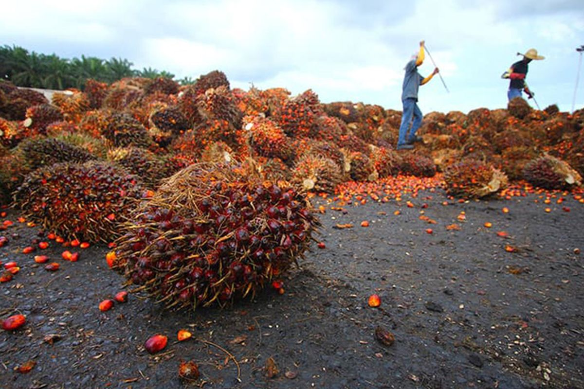 India slashes import taxes on palm oil as retail cooking oil prices remain high