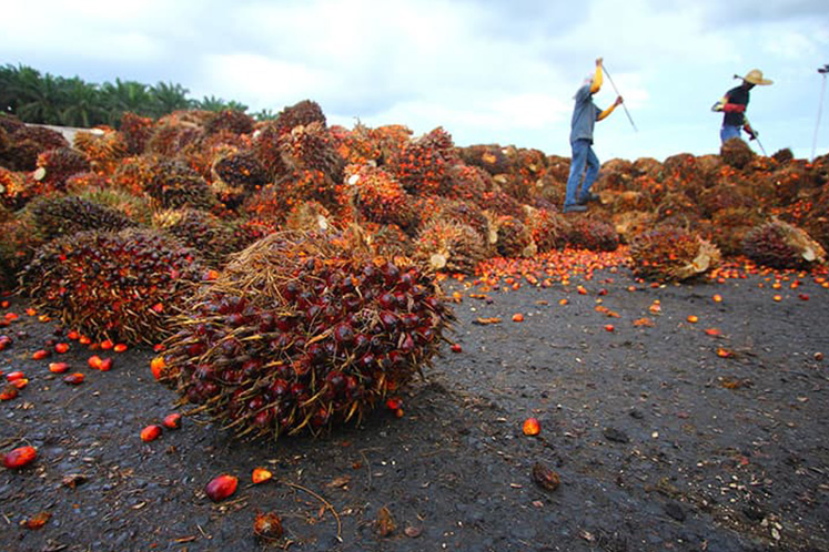 Ministry to submit labour report to avoid further restrictions on commodity products