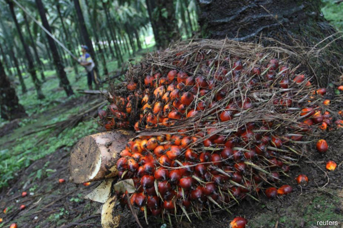 Palm oil price rally not sustainable — analysts Fry, Mistry