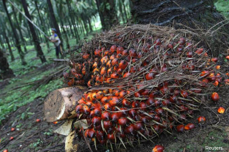 Palm oil hits low since October after related oils slip