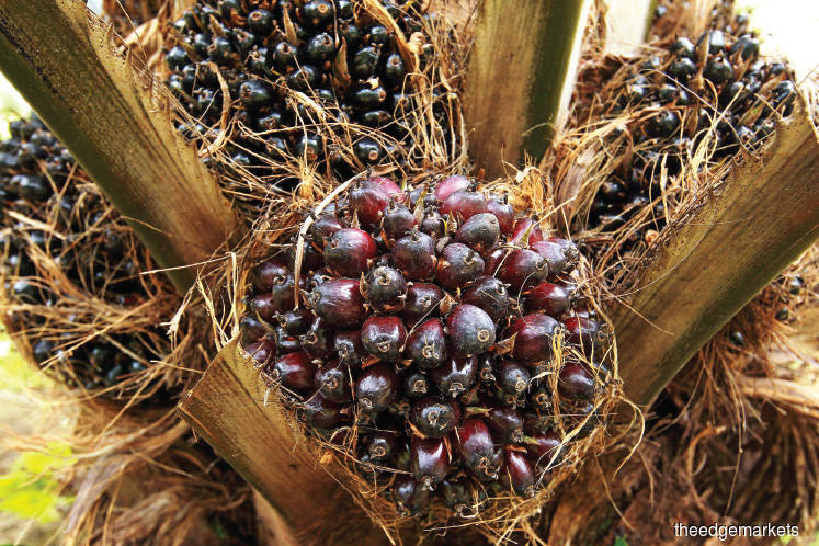 Malaysia signs deals to sell palm oil in South Asia, China