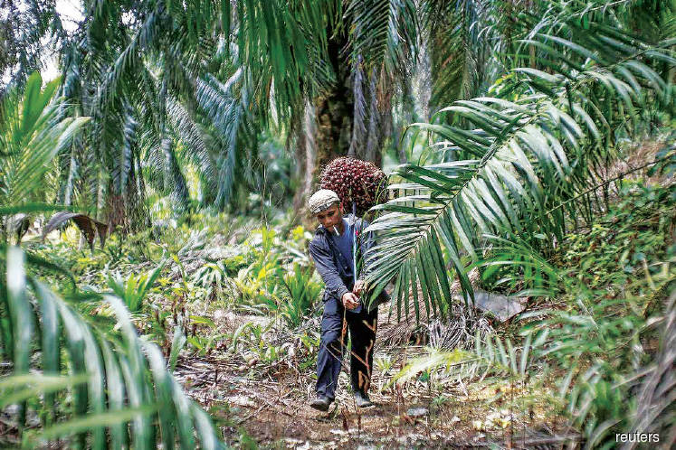 FGV to appeal against RSPO suspension