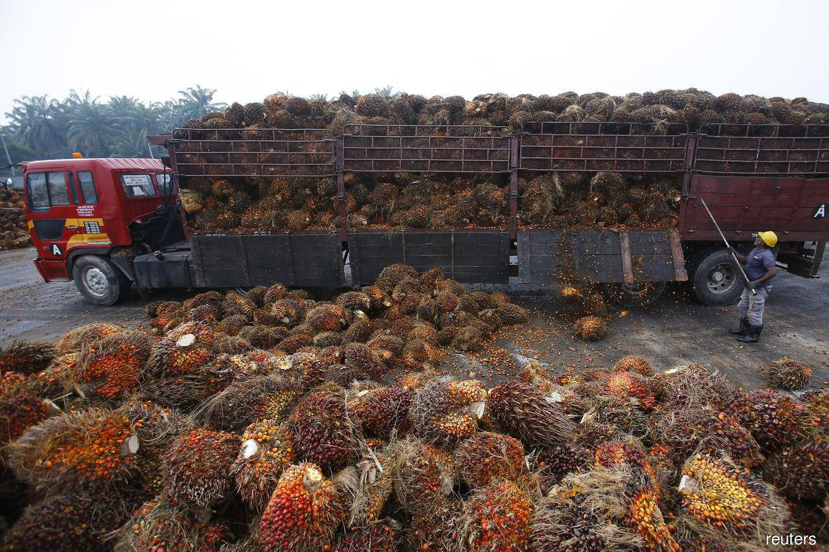 Malaysia to file WTO case against EU over palm oil curbs this year