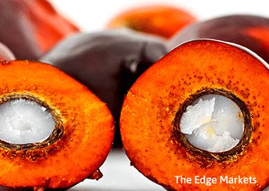 Palm oil still targets 1,963 ringgit