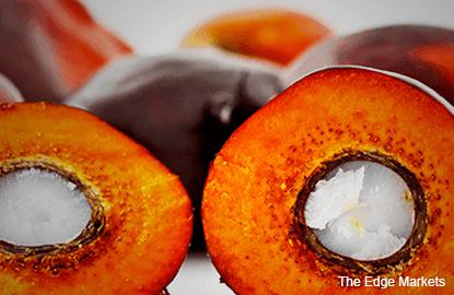 Palm oil still targets RM3,014