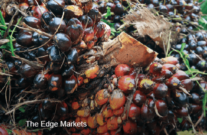 Palm oil related stocks down in anticipation of weaker MPOB statistics